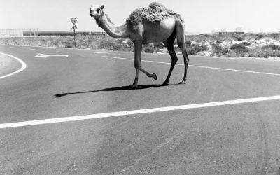 Dubai Contrast: Sprawling City vs Natural Desert